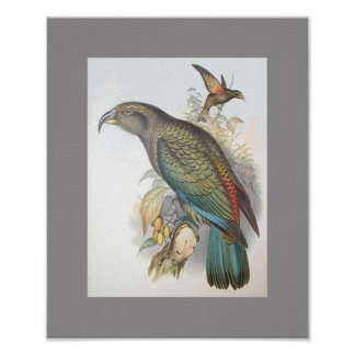 Kea (small only) poster