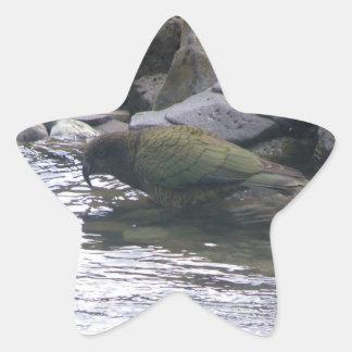 Kea Star Sticker