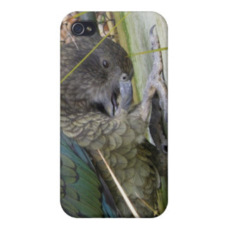 Kea: The Alpine Parrot iPhone 4/4S Covers