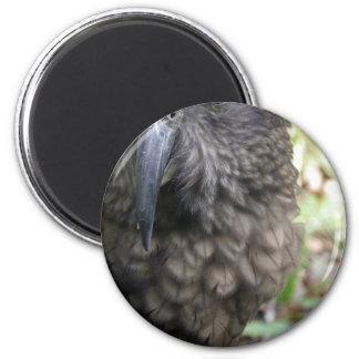 Kea: The Alpine Parrot Magnets