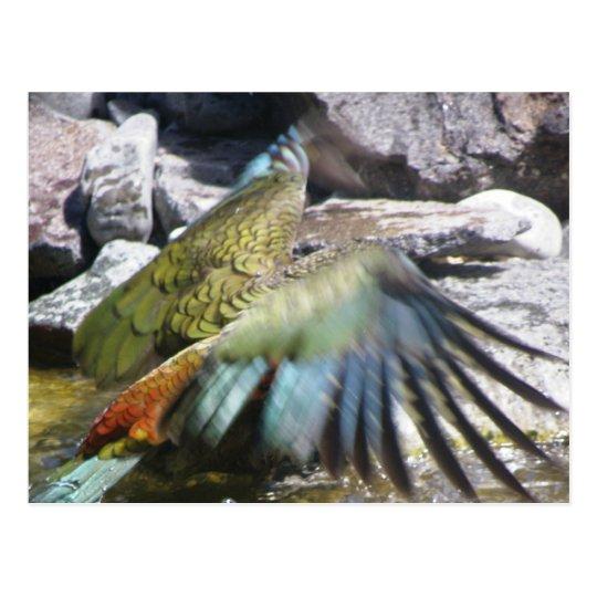 Kea: The Alpine Parrot Postcard