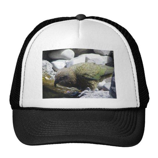 Kea: The Alpine Parrot Trucker Hat