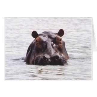 Keeboko curioso (hipopótamo) felicitaciones