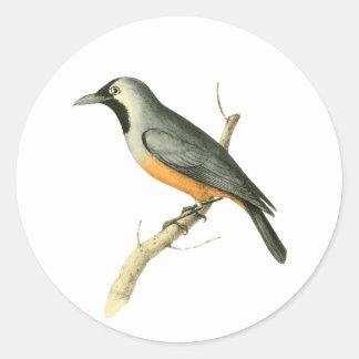 Keel-billed Flycatcher Bird Illustration by Willia Round Sticker