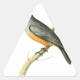 Keel-billed Flycatcher Bird Illustration by Willia Triangle Sticker