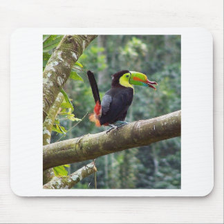 Keel-Billed Toucan Mouse Pad