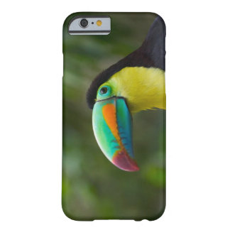 Keel-billed toucan on tree branch, Panama Barely There iPhone 6 Case