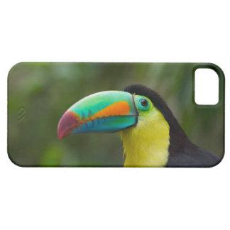 Keel-billed toucan on tree branch, Panama iPhone SE/5/5s Case