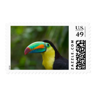 Keel-billed toucan on tree branch, Panama Postage
