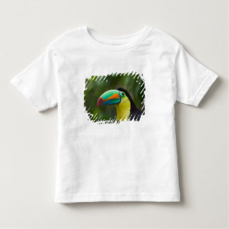 Keel-billed toucan on tree branch, Panama T Shirt