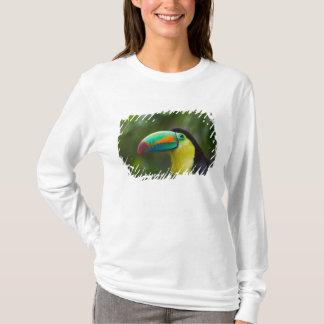 Keel-billed toucan on tree branch, Panama T-Shirt