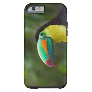 Keel-billed toucan on tree branch, Panama Tough iPhone 6 Case