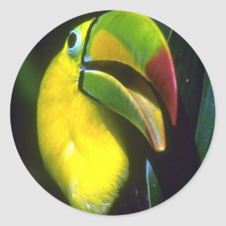 Keel-billed toucan classic round sticker