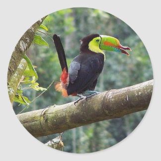 Keel Billed Toucan Round Stickers