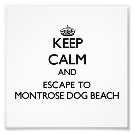 Keep calm and escape to Montrose Dog Beach Illinoi Photographic Print