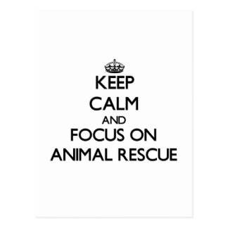 Keep calm and focus on Animal Rescue Postcard