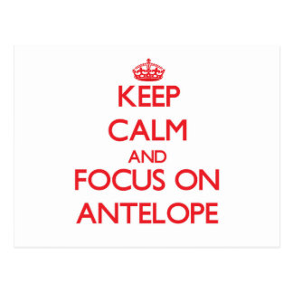 Keep Calm and focus on Antelope Postcard
