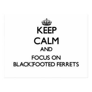 Keep calm and focus on Black-Footed Ferrets Postcards
