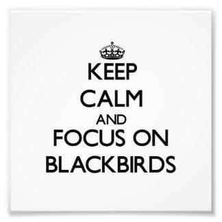 Keep Calm and focus on Blackbirds Art Photo