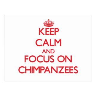 Keep Calm and focus on Chimpanzees Postcard