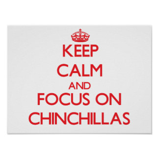 Keep calm and focus on Chinchillas Posters
