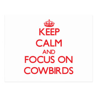 Keep calm and focus on Cowbirds Post Card