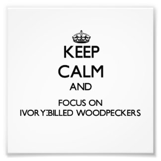 Keep calm and focus on Ivory-Billed Woodpeckers Photographic Print