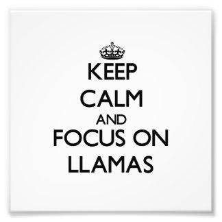 Keep calm and focus on Llamas Photo