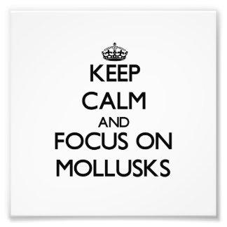 Keep calm and focus on Mollusks Photo Art