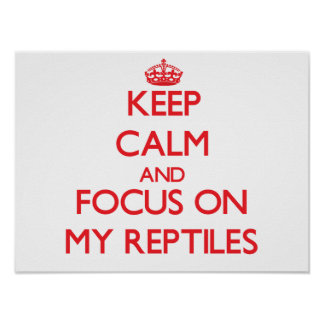 Keep Calm and focus on My Reptiles Poster