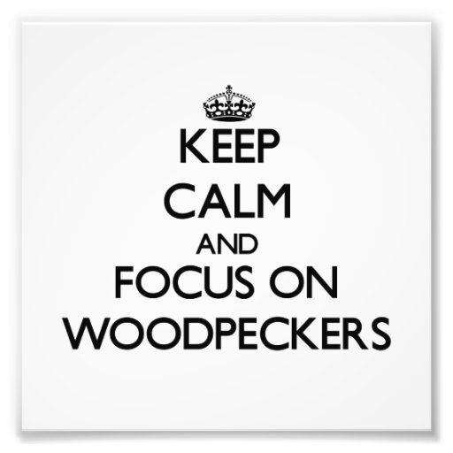 Keep calm and focus on Woodpeckers Photograph