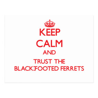 Keep calm and Trust the Black-Footed Ferrets Postcard