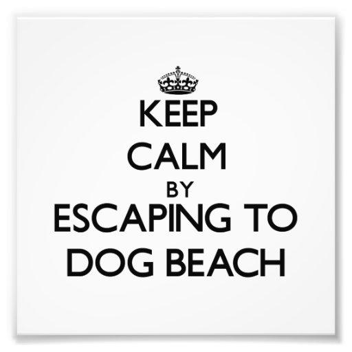 Keep calm by escaping to Dog Beach Florida Photograph