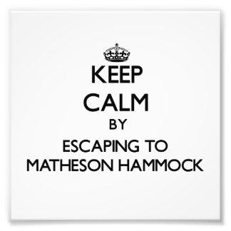 Keep calm by escaping to Matheson Hammock Florida Photograph