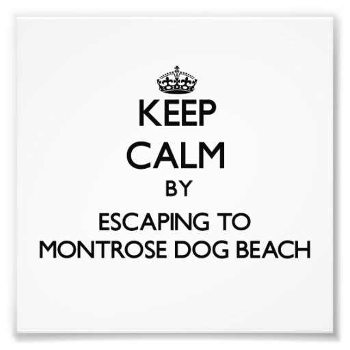 Keep calm by escaping to Montrose Dog Beach Illino Art Photo