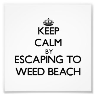 Keep calm by escaping to Weed Beach Connecticut Photograph