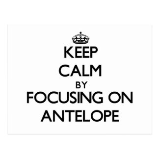 Keep Calm by focusing on Antelope Postcard