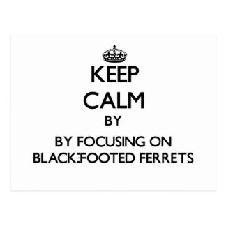 Keep calm by focusing on Black-Footed Ferrets Post Cards