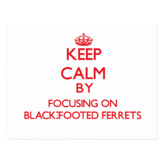 Keep calm by focusing on Black-Footed Ferrets Post Card