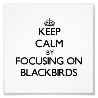 Keep Calm by focusing on Blackbirds Photo Art
