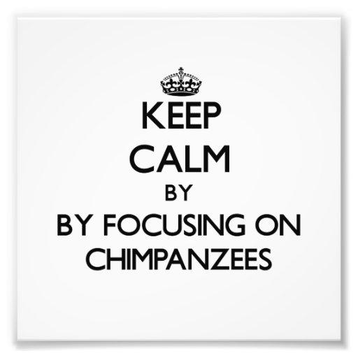 Keep calm by focusing on Chimpanzees Photo Art