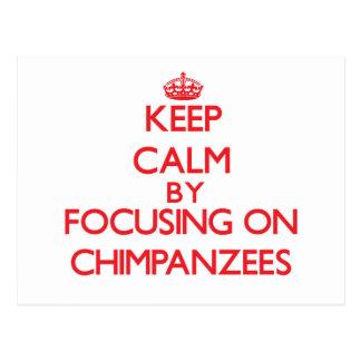 Keep Calm by focusing on Chimpanzees Postcard