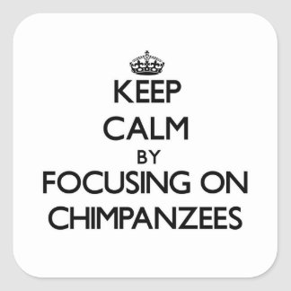 Keep Calm by focusing on Chimpanzees Square Stickers