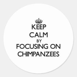 Keep Calm by focusing on Chimpanzees Round Sticker
