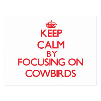 Keep calm by focusing on Cowbirds Post Cards