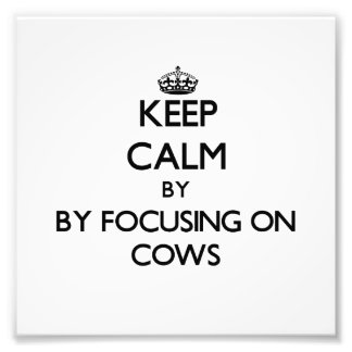 Keep calm by focusing on Cows Photographic Print