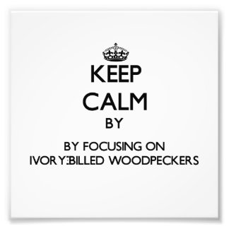 Keep calm by focusing on Ivory-Billed Woodpeckers Photograph