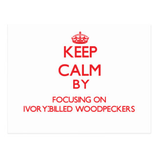 Keep calm by focusing on Ivory-Billed Woodpeckers Postcard