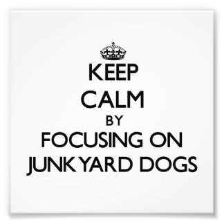 Keep Calm by focusing on Junkyard Dogs Photographic Print