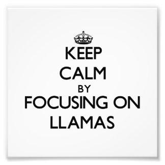 Keep Calm by focusing on Llamas Art Photo